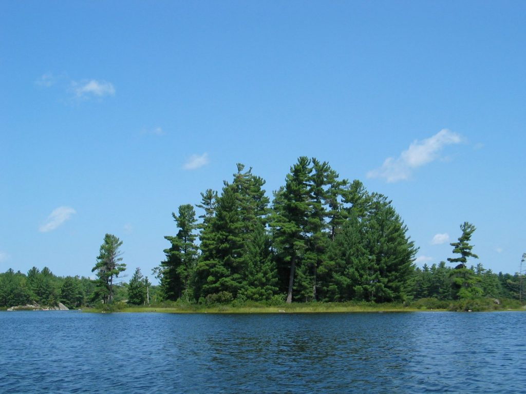 picture of trees and a lake with blue skies, taken while backcountry camping at Kawartha Highlands Provincial Park