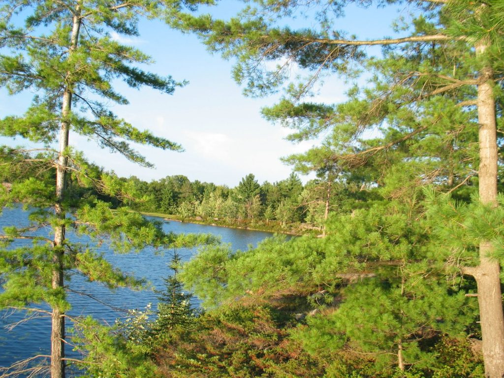 picture of trees and a lake taken at Kawartha Highlands Provincial Park while backcountry or canoe camping