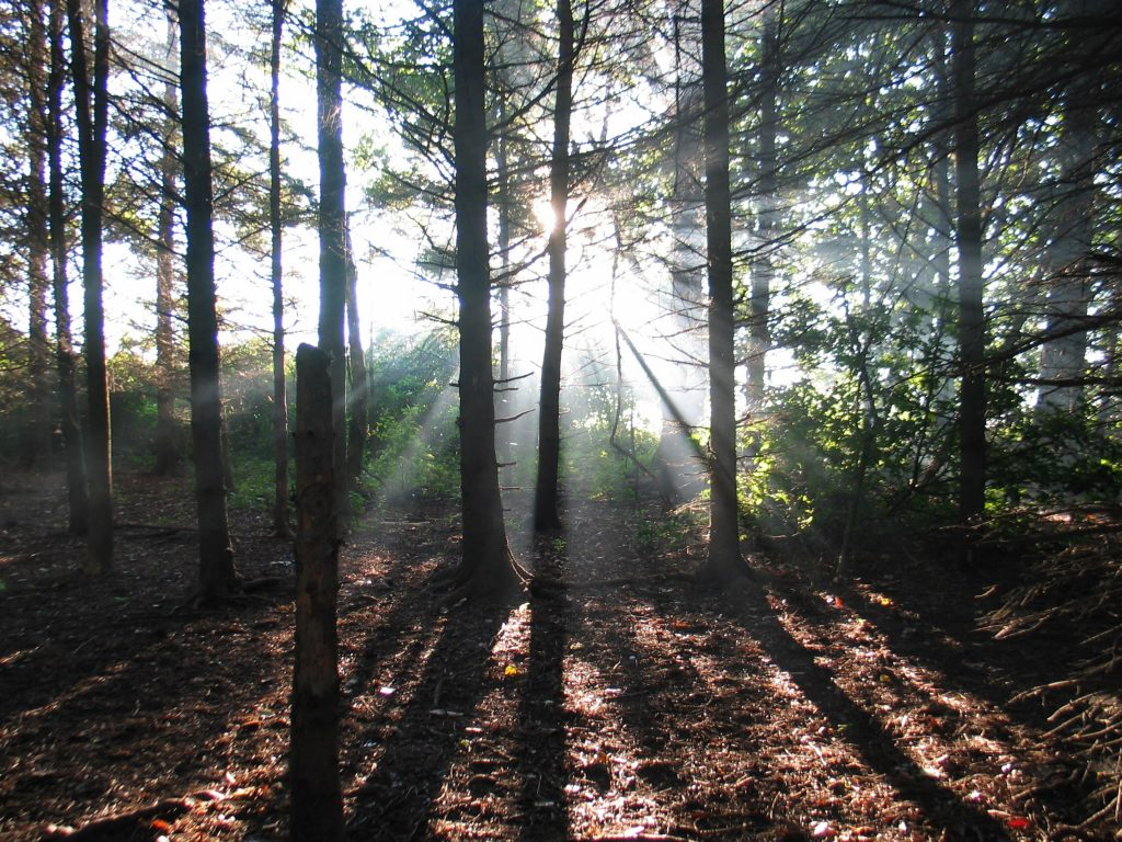 the woods at darlington provincial park near Toronto Ontario